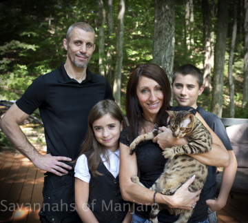 Savannah Cats and Kittens